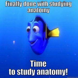 studying-anatomy